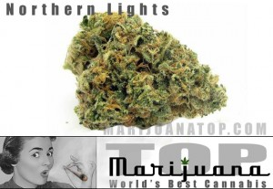 northern-lights-best-strain