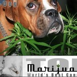 pot-dog-recipe