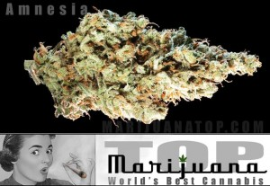 Buy the strongest Haze marijuana seeds online