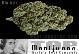 Stongest marijuana strain