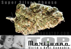 Super strong marijuana strain